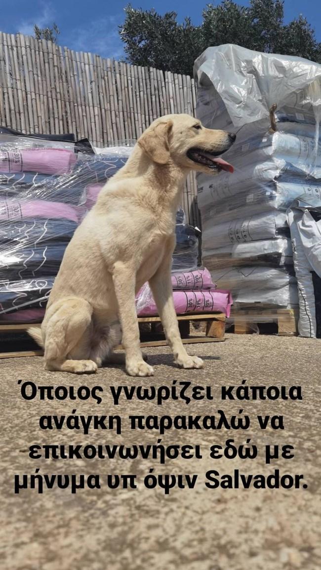 Λεωνίδας Κουτσόπουλος Story